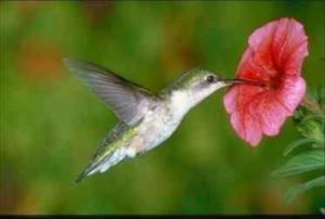 colibri accueil0001